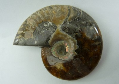 Bijouterie Azurite 24100 Bergerac. Ammonite, fossile, Madagascar